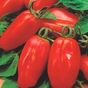 rajciak san marzano